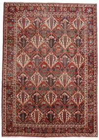 Bakhtiar szőnyeg VEXZT12