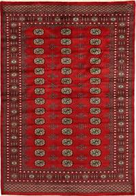 Pakistan Buchara 2ply Teppich SHZA169