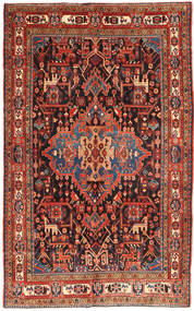 Koliai szőnyeg AXVZZZO791