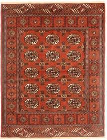 Turkaman tæppe AXVZZZZQ1060